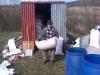 Jarné upratovanie v sklade krmiva, marec 2016