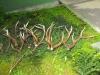 Jún - mesiac poľovníctva, posedenie pri guľáši, 11.06.2016