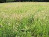 Úprava okolia posedov, kosenie trávy, Bykovec, jún 2020