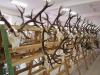 Výstava poľovníckych trofejí, Gelnica, marec 2016